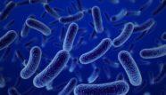 Kurunga – mūsdienīgs probiotiķis bērniem un pieaugušajiem